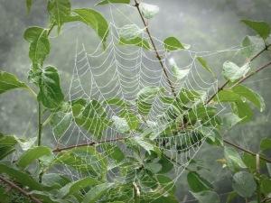 Spiderweb1